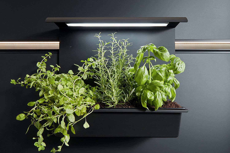 Detailbild von Panel-System mit Kräuterbepflanzung